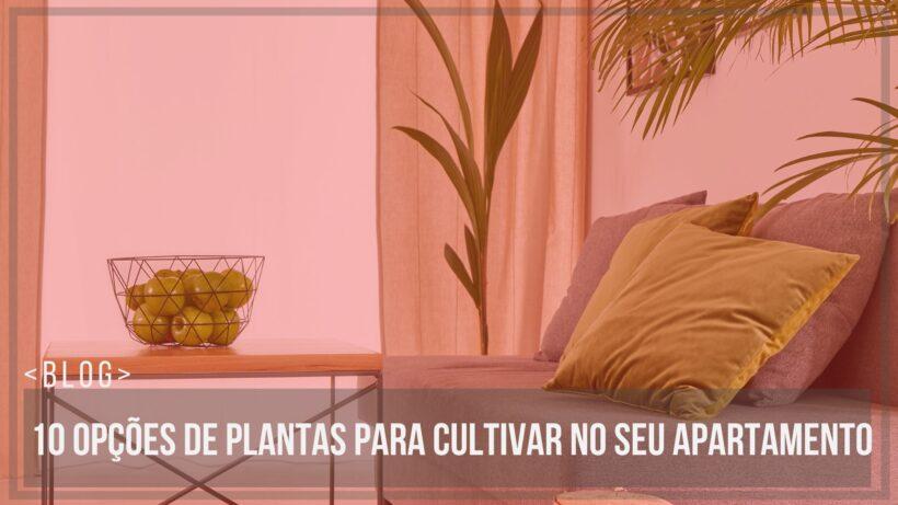 10 opões de plantas para cultivar no seu apartamento