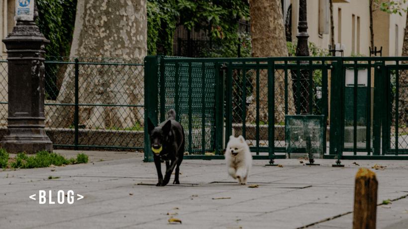 animais brincando num espaço pet friendly imobiliaria em itaquera